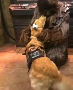 Chewbacca acaricia un perro