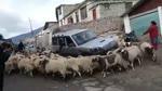 Goats orbit