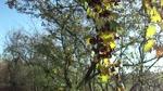 Windy Tree. -