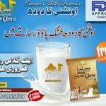 Susu unta camel milk powder