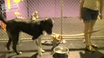 How to train ANY DOG