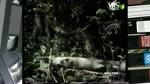 NEL REGNO DEGLI ANIMALI - Tiwai l'isola delle scimmie, domanda a Dorothy Fragesy su scimmie ed utensili, Fiumi, Etologia della vita quotidiana – come vedono gli animali, Viaggio misterioso, ABC degli animali – rituali