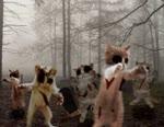 gatos zombies