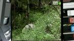 IL PANDA GIGANTE - I LEMURI DEL MADAGASCAR