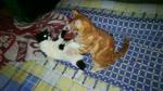 kitties fight over in night day