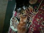 Kitties Find Plate Of Bones