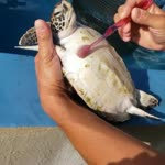 Turtle cleaning