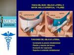 Usa med anatomia - abdomen 1.1