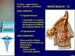USA med anatomia -