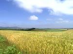 高島武彦 草原