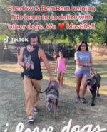 Dog School In College Station - K9 Sensei Dog Training