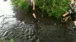 Kirrie Den Stream