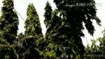 Tree's has life