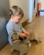 Cute baby and puppies