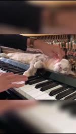 Die Katze liebt Musik